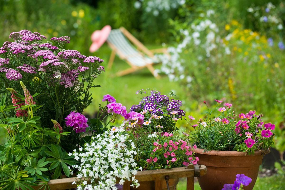 get the garden. Black Bedroom Furniture Sets. Home Design Ideas