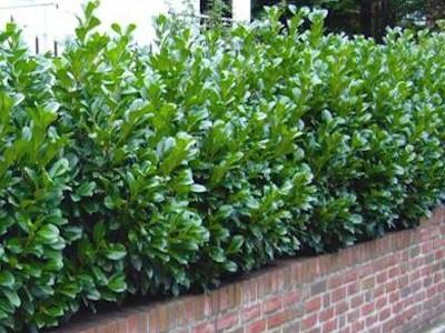 Gartenkonfigurator: Heckenpflanzen   Pflanzmich.De