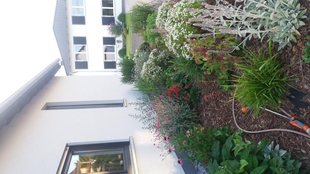 leberbl mchen hepatica nobilis g nstig online kaufen. Black Bedroom Furniture Sets. Home Design Ideas