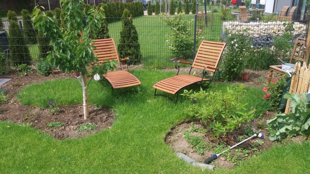 scharlachkirsche prunus sargentii g nstig online kaufen. Black Bedroom Furniture Sets. Home Design Ideas