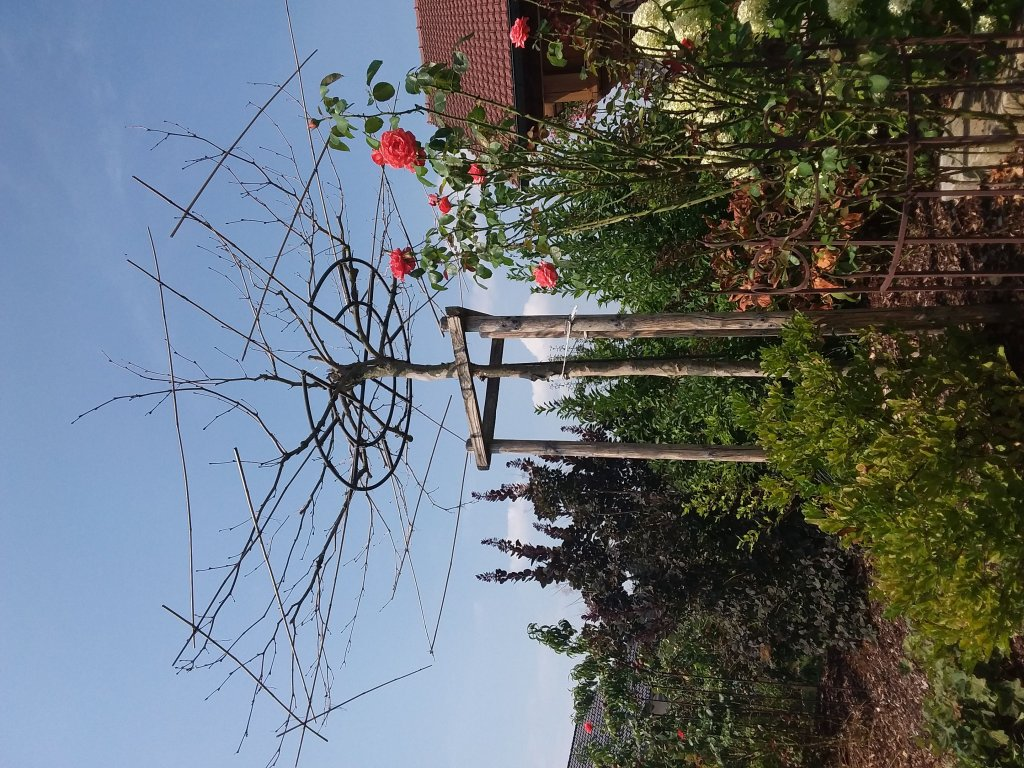 Garten pampasgras citaro cortaderia selloana citaro g nstig online kaufen - Garten ohne gras ...