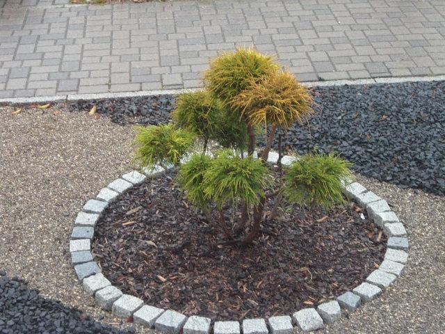 fragen an den meister bonsai lebensbaum. Black Bedroom Furniture Sets. Home Design Ideas
