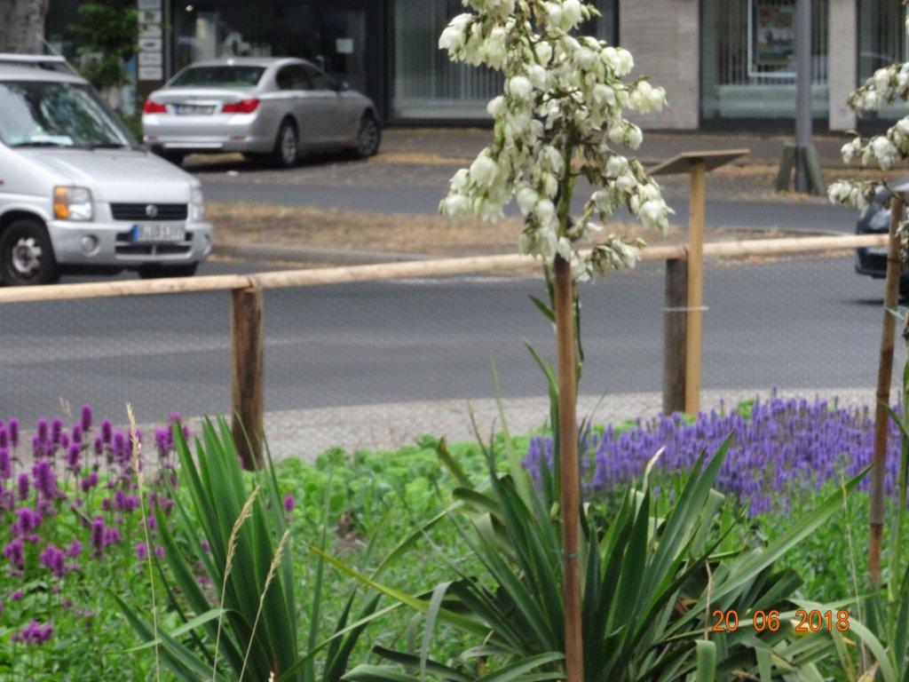 kerzen palmlilie yucca gloriosa g nstig online kaufen. Black Bedroom Furniture Sets. Home Design Ideas