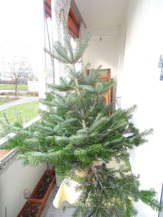 weihnachtsbaum fichte picea abies christbaum g nstig. Black Bedroom Furniture Sets. Home Design Ideas