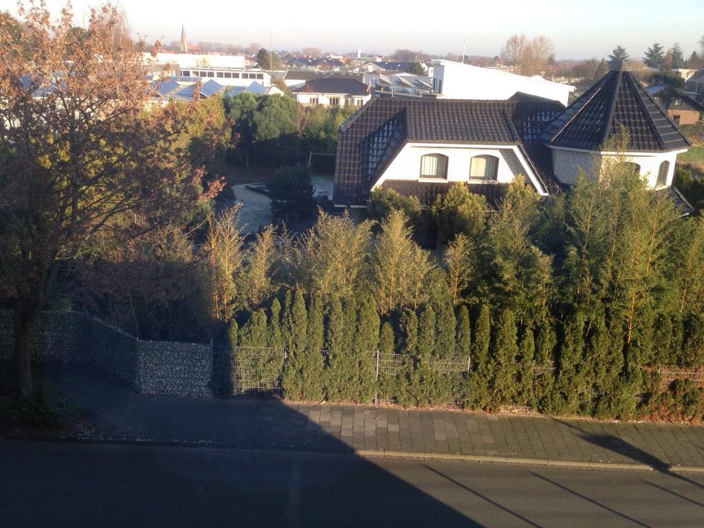gelber zwerg lebensbaum thuja orientalis aurea nana g nstig aus der baumschule online kaufen. Black Bedroom Furniture Sets. Home Design Ideas