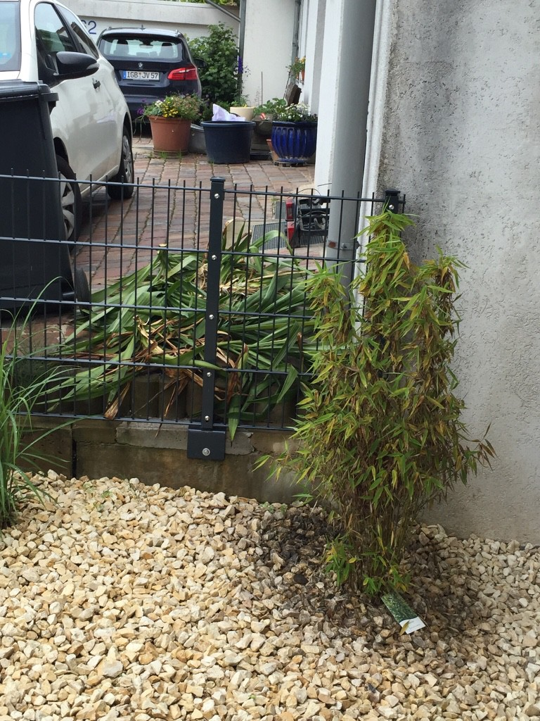 kerzen palmlilie italia yucca gloriosa g nstig aus der. Black Bedroom Furniture Sets. Home Design Ideas